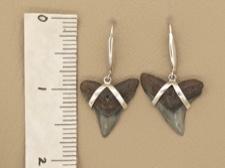 Shark Tooth Earrings