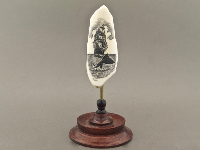 Fossil Walrus Tooth Scrimshaw Whale's Tail - Click Image to Close
