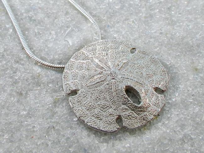 A Classic Sanddollar - Click Image to Close